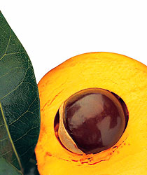 Lucuma bio superfruit antioxydant naturel